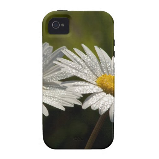 Dew Bejeweled Ox-eye Daisy Wildflowers Case-Mate iPhone 4 Cover