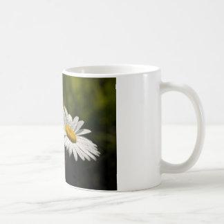 Dew Bejeweled Ox-eye Daisy Wildflowers Coffee Mugs
