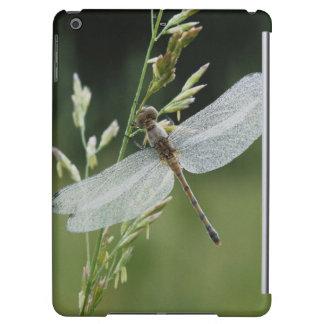 Dew covered Darner Dragonfly