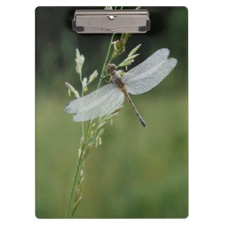 Dew covered Darner Dragonfly Clipboard