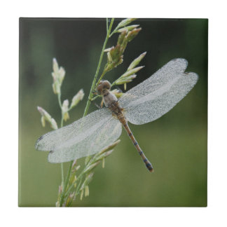 Dew covered Darner Dragonfly Tile