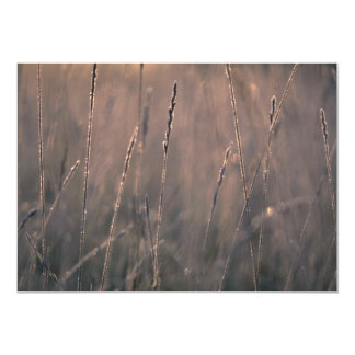 Dew-covered grass at dawn announcement