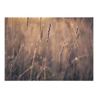 Dew-covered grass at dawn invite