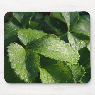 Dew Covered Leaves Mousepad