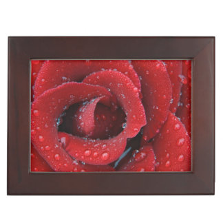 Dew covered red rose decorating grave site in keepsake box