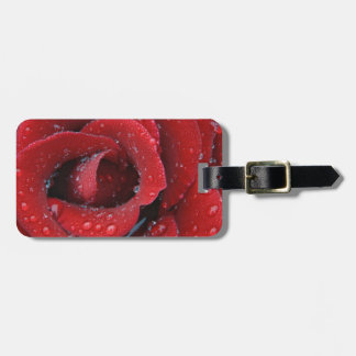 Dew covered red rose decorating grave site in luggage tag