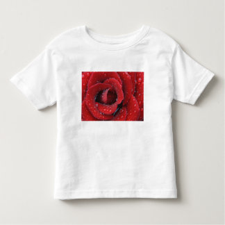 Dew covered red rose decorating grave site in toddler T-Shirt