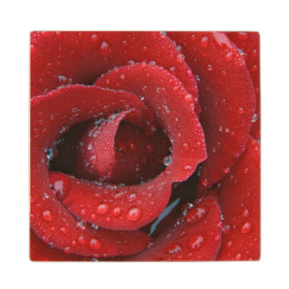 Dew covered red rose decorating grave site in wood coaster