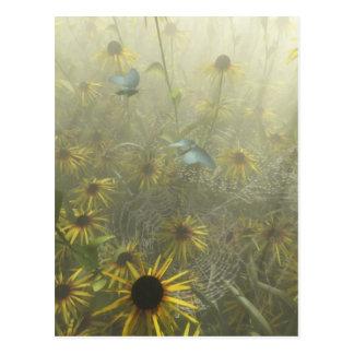 Dew Drenched Webs Postcard