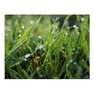 Dew Drop Grass Gardening postcard