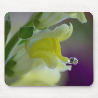 DEW DROP ON A GLADIOLUS by Michelle Diehl Mouse Pad