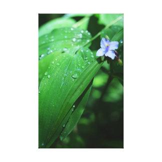 Dew Drops Gallery Wrap Canvas