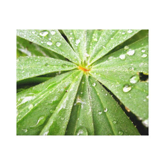 Dew Drops Gallery Wrapped Canvas
