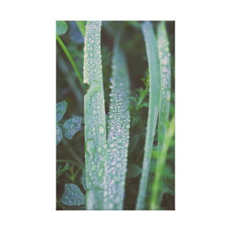 Dew drops in the grass canvas print