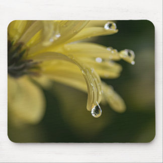 DEW DROPS ON A DAISY by Michelle Diehl Mouse Pad