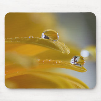 DEW DROPS ON A GERBER DAISY by Michelle Diehl Mouse Pad