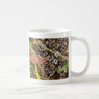 Dew Drops on a Spider Web Basic White Mug