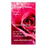 Dew Drops on Rose  Business Cards