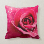 Dew Drops on Rose Pillow