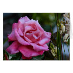 DEW DROPS ON ROSES GREETING CARD