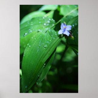 Dew Drops Posters