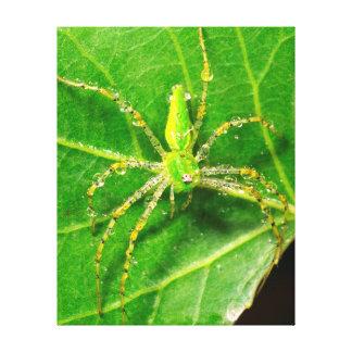 Dew on a Green Lynx Spider Canvas Print