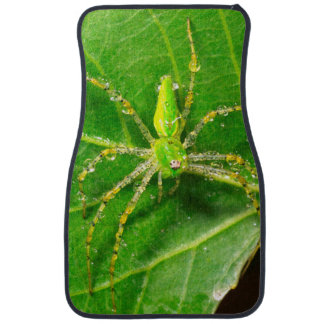 Dew on a Green Lynx Spider Car Mat