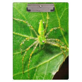 Dew on a Green Lynx Spider Clipboard