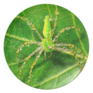 Dew on a Green Lynx Spider Dinner Plates