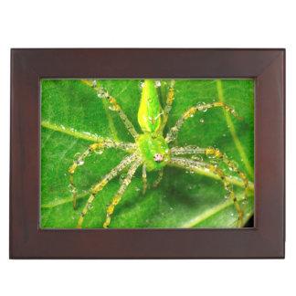 Dew on a Green Lynx Spider Keepsake Box