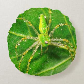 Dew on a Green Lynx Spider Round Cushion