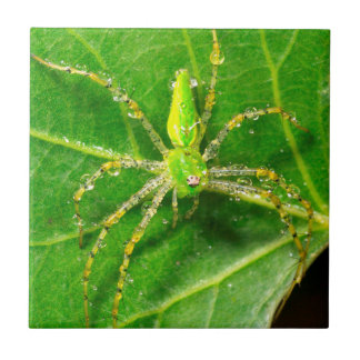 Dew on a Green Lynx Spider Tile