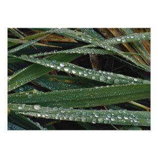 Dew on blades of grass custom announcement