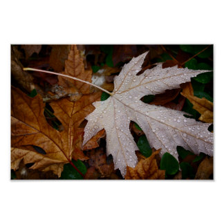 Dew on Fallen Autumn Leaves Photograph Poster