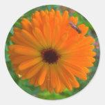 DewBee Round Sticker