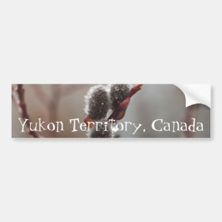 Dewy Catkin; Yukon Territory Souvenir Bumper Sticker