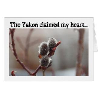 Dewy Catkin; Yukon Territory Souvenir Greeting Card