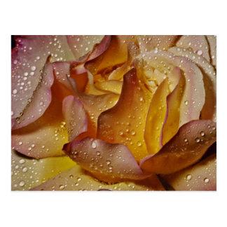 Dewy dusty yellow rose flowers postcard