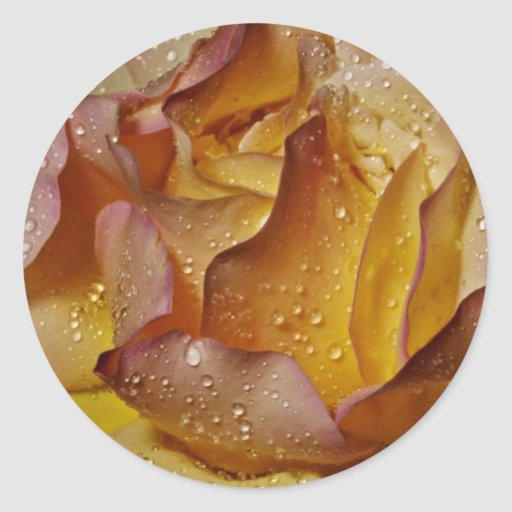 Dewy, dusty yellow rose  flowers round stickers