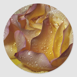Dewy dusty yellow rose round sticker