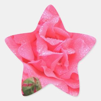 Dewy Pink Rose Star Sticker