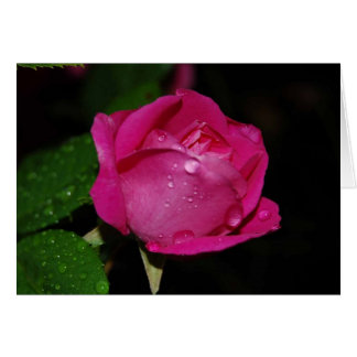 Dewy rose cards