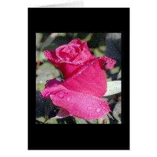 Dewy Rosebud notecard Note Card