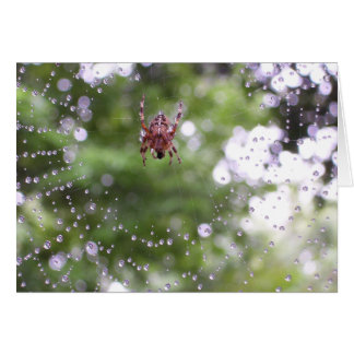 Dewy Spider Greeting Card