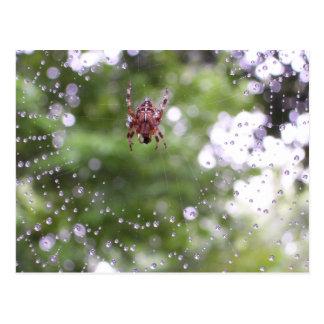Dewy Spider Postcard
