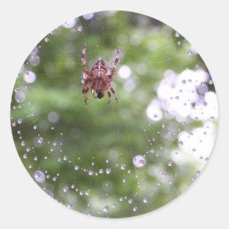 Dewy Spider Round Sticker