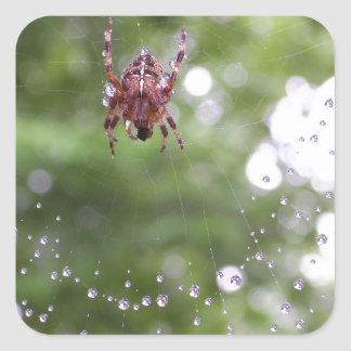 Dewy Spider Square Stickers