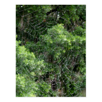 Dewy Spider Web Postcards