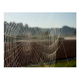 Dewy Web Postcard
