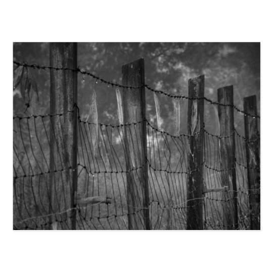 Dewy Webs on Barbed Wire Postcard